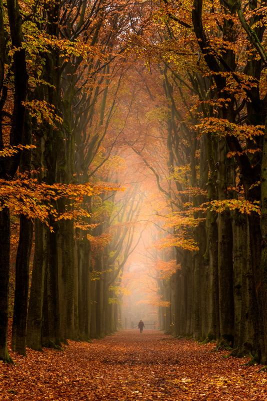 Nummer 9 - Mist in het herfstbos, gezien in een statige bomenlaan.